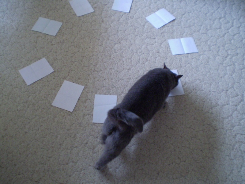 http://i42.servimg.com/u/f42/09/02/08/06/20120413.jpg