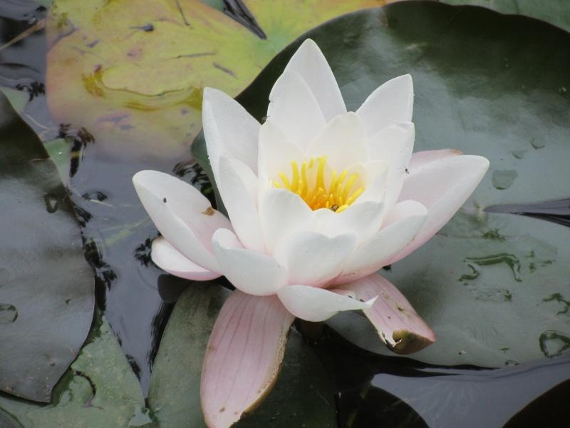 http://i42.servimg.com/u/f42/09/02/08/06/img_0710.jpg