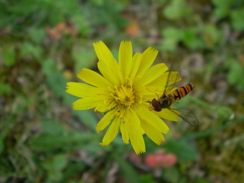 http://i42.servimg.com/u/f42/09/02/08/06/j610.jpg