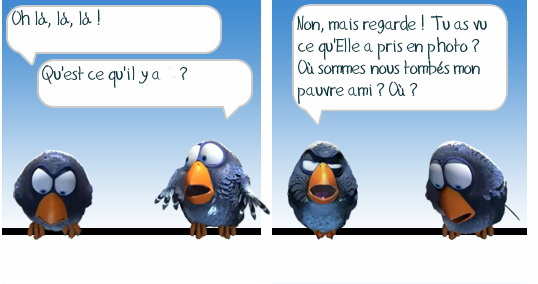 http://i42.servimg.com/u/f42/09/02/08/06/oiseau14.jpg