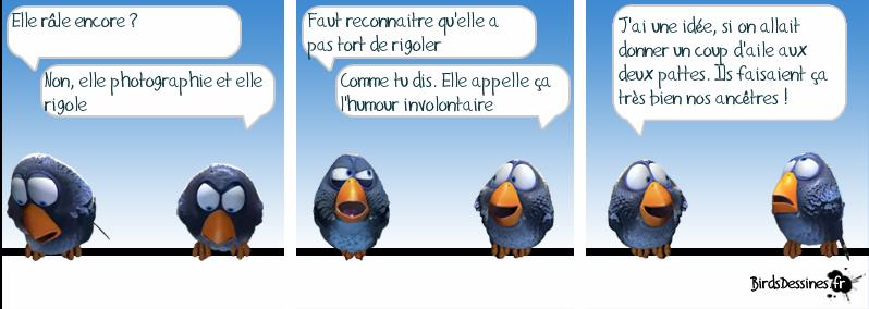 http://i42.servimg.com/u/f42/09/02/08/06/oiseau26.png