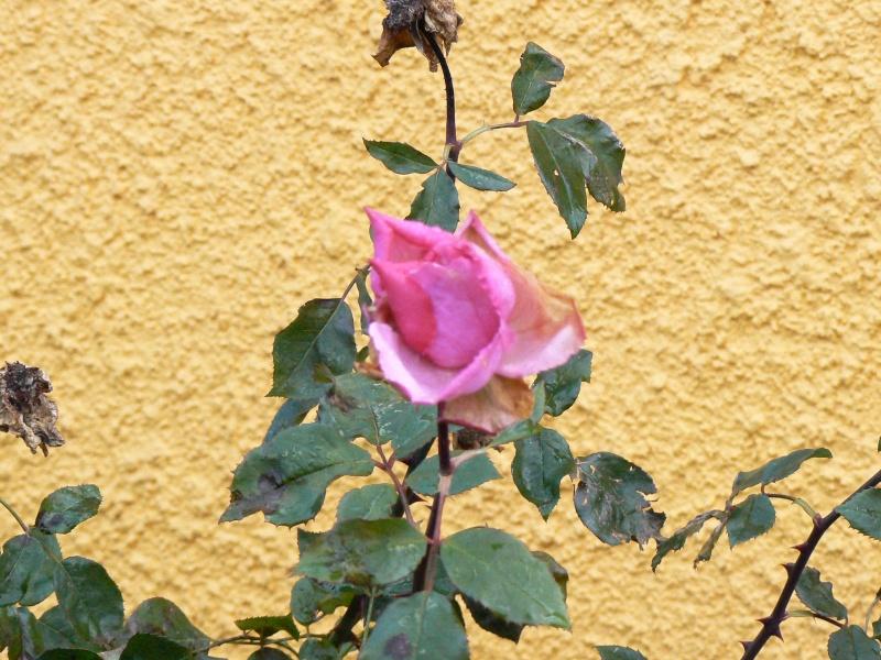 http://i42.servimg.com/u/f42/09/02/08/06/p1380912.jpg