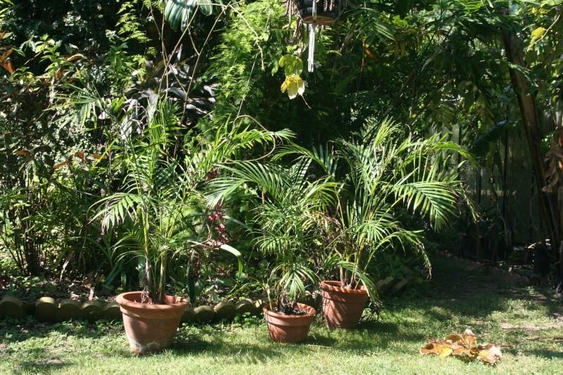 Identification plante ventuellement maladie au jardin for Plante 42 chris