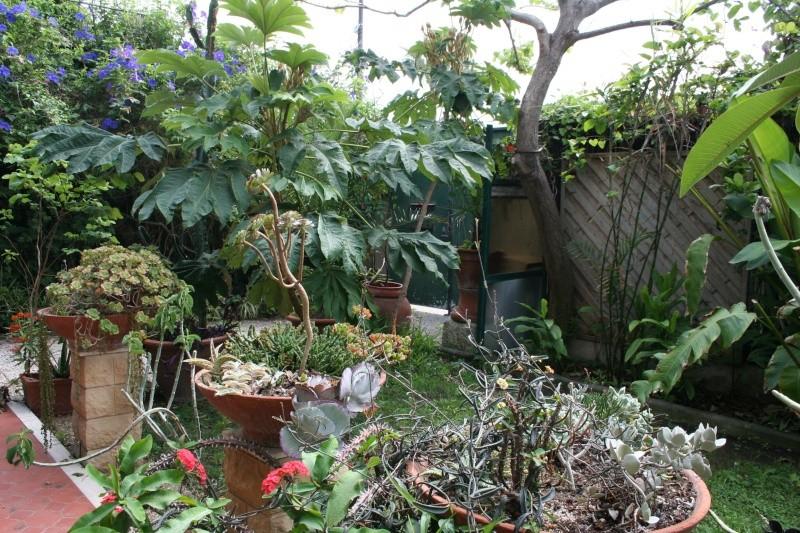 aeonium arboreum atropurpureum sp cial. Black Bedroom Furniture Sets. Home Design Ideas