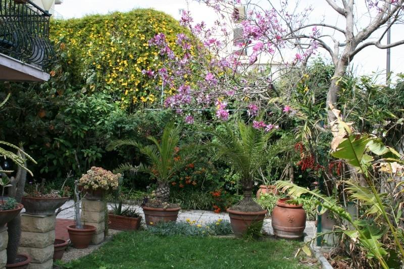 identifiee phoenix canariensis plante verte page 2 au jardin forum de jardinage. Black Bedroom Furniture Sets. Home Design Ideas