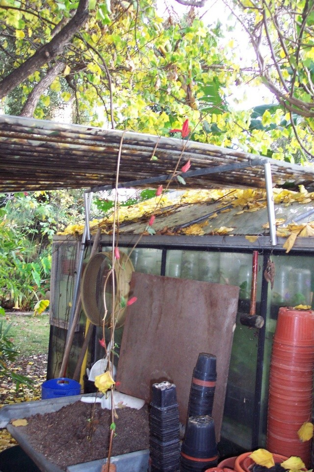 Serre de jardin for Chauffage pour serre de jardin