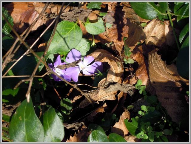http://i42.servimg.com/u/f42/09/02/90/60/2011-221.jpg