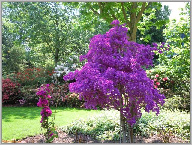 http://i42.servimg.com/u/f42/09/02/90/60/jardin12.jpg