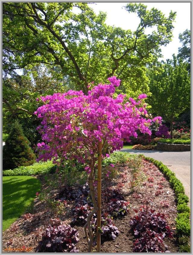 http://i42.servimg.com/u/f42/09/02/90/60/jardin13.jpg