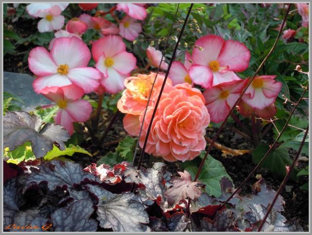http://i42.servimg.com/u/f42/09/02/90/60/jardin20.jpg
