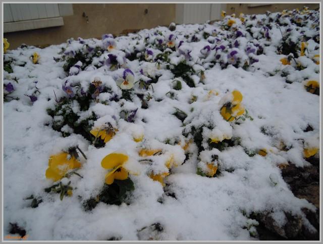 http://i42.servimg.com/u/f42/09/02/90/60/neige_11.jpg