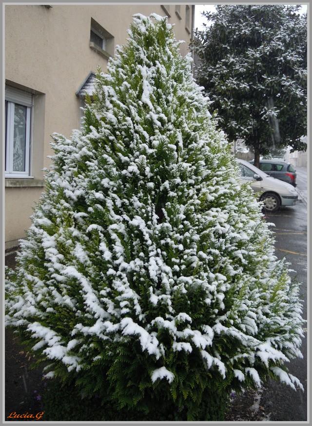 http://i42.servimg.com/u/f42/09/02/90/60/neige_18.jpg