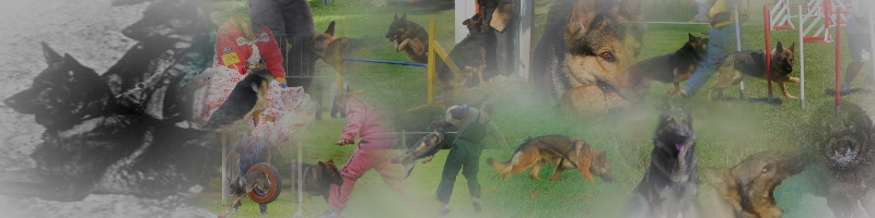 Bergers Allemands et Sports Canins