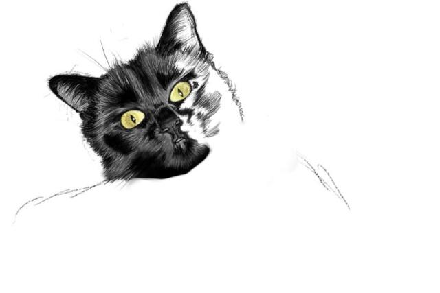 Un chat noir - Dessin chat noir ...