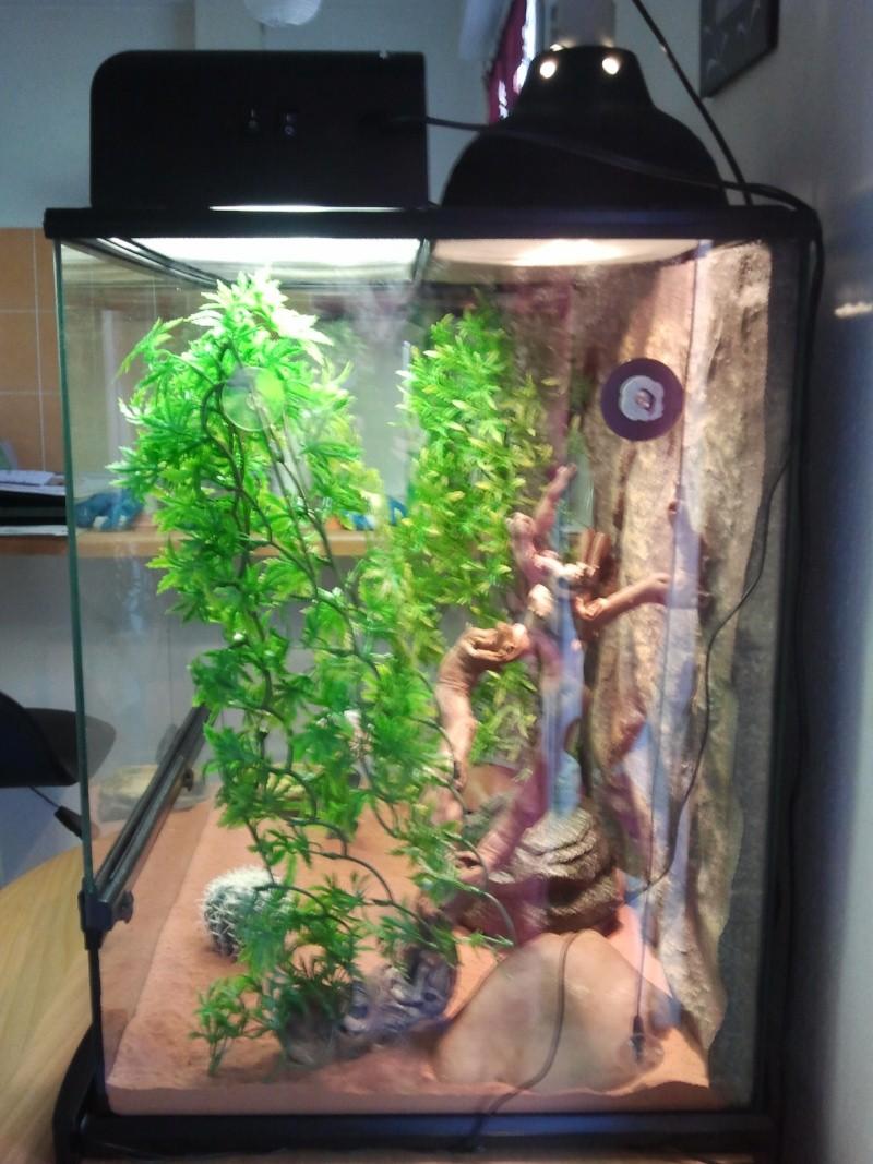 probl me chauffage de mon exo terra pour mes geckos l opard. Black Bedroom Furniture Sets. Home Design Ideas