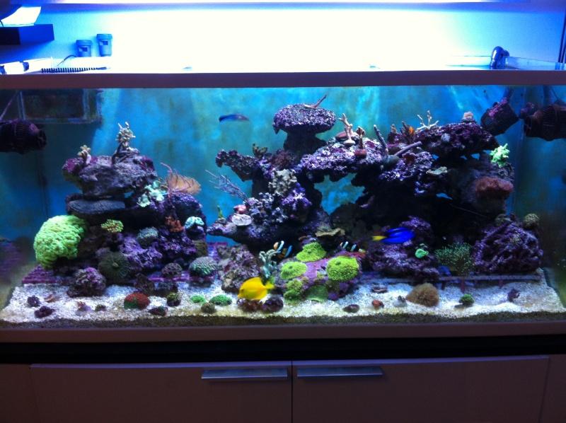 aquarium eau de mer fish only 28 images exemple id 233. Black Bedroom Furniture Sets. Home Design Ideas