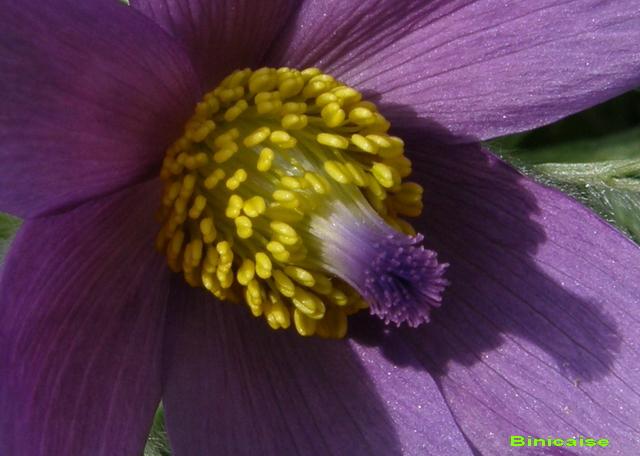 Jolis coeurs..... dans Fleurs et plantes 640_co10