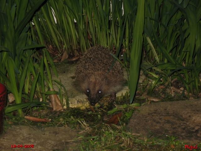 Le visiteur de la nuit.... dans Animaux 640_he10
