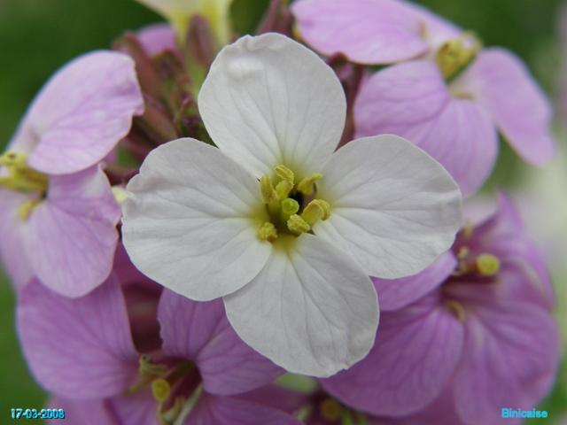 Macros fleurs du jardin. dans Fleurs et plantes fleurs11