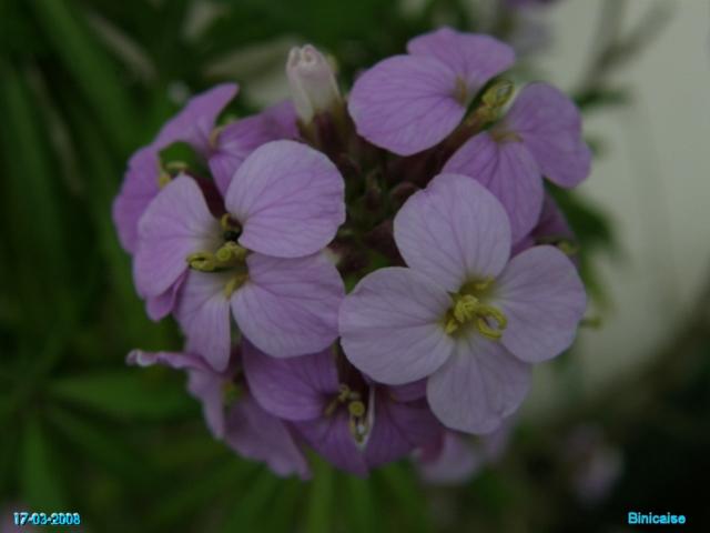 fleurs12 dans Photos