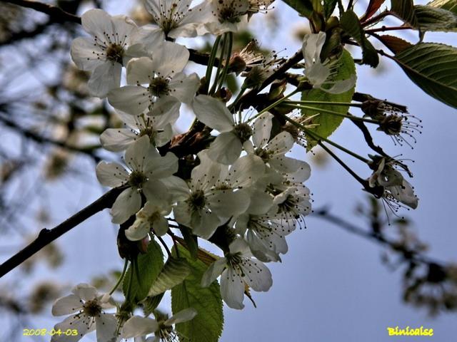 fleurs17