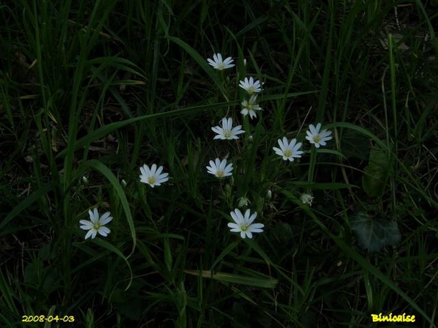 fleurs19 dans Photos