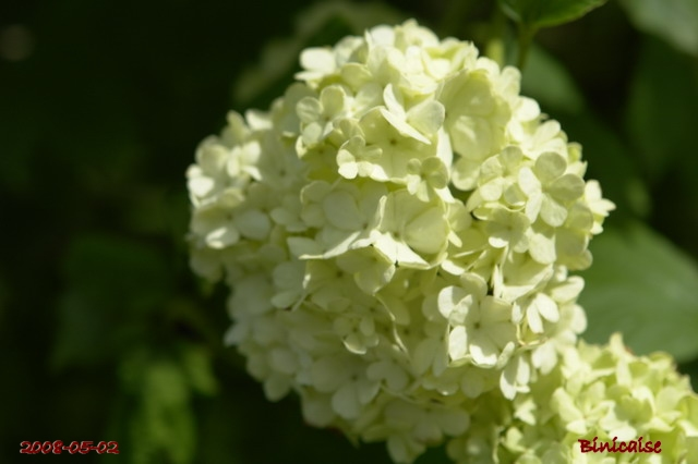 fleurs31 dans Photos