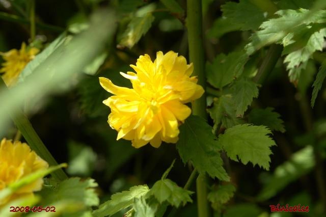 fleurs34 dans Photos