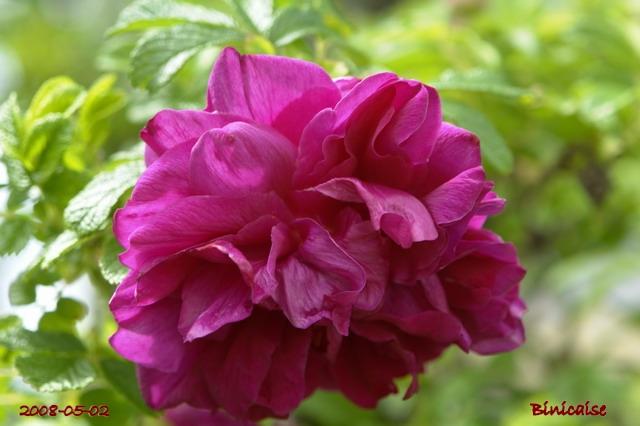 fleurs36 dans Photos