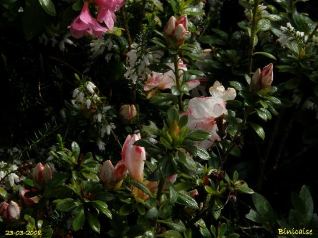 jardin11 dans Photos