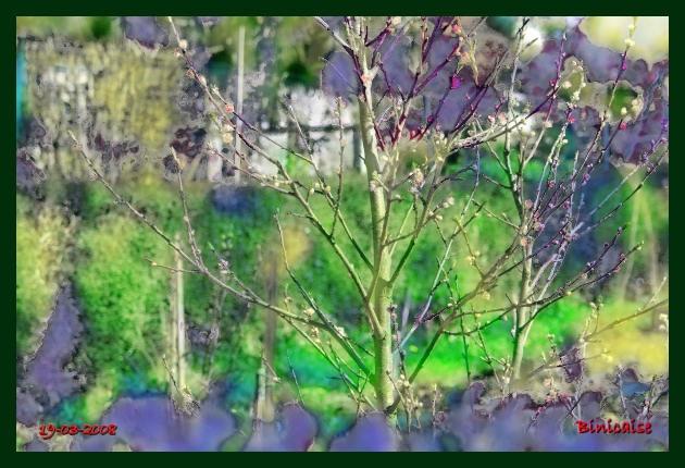 Floraisons . dans Creations jardin20