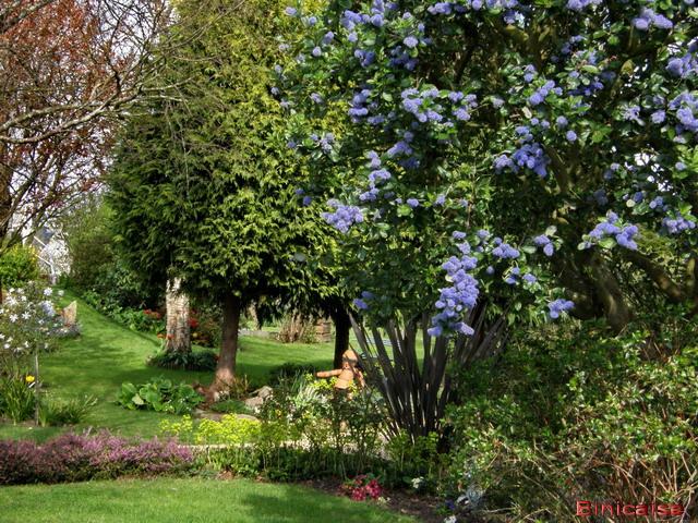 Belles scènes de jardins à Auray. dans Fleurs et plantes jardin22