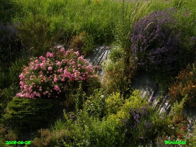 jardin26