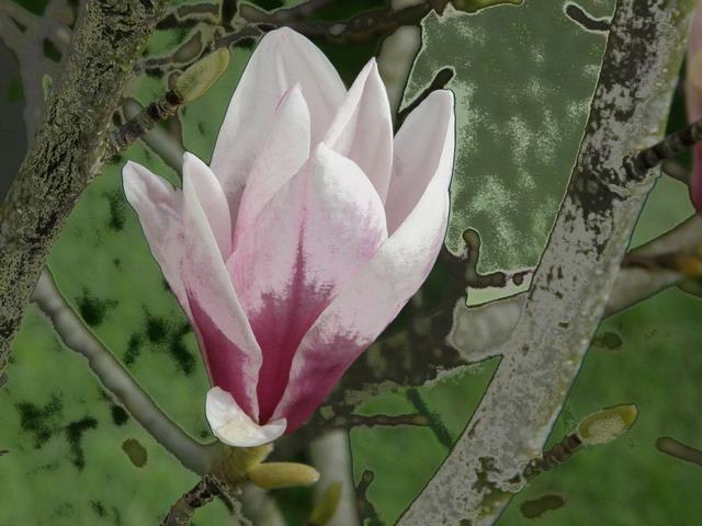 Fantaisies fleuries..... dans Creations magnol10