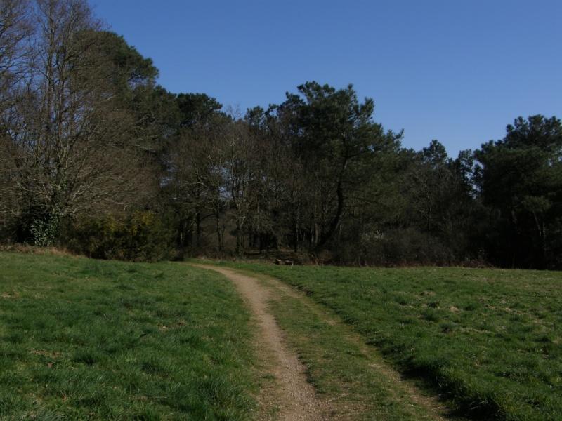 Promenade de Printemps...1/3 dans Bretagne p3053610