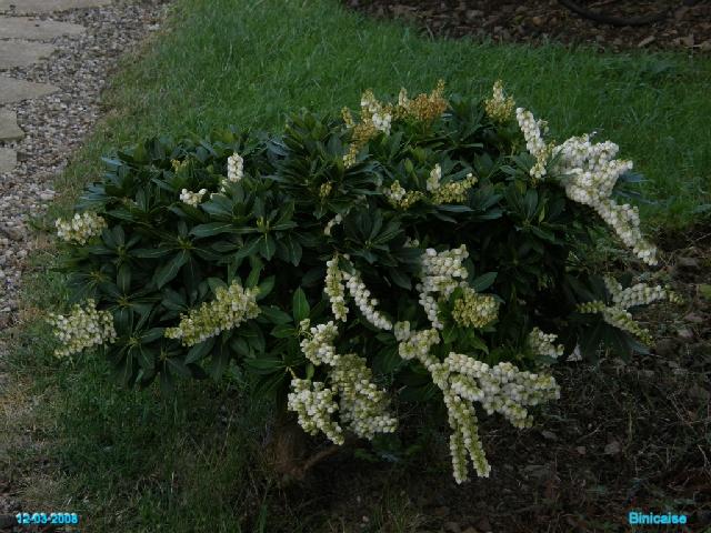 Plantes de terre de bruyères. dans Fleurs et plantes p3123718