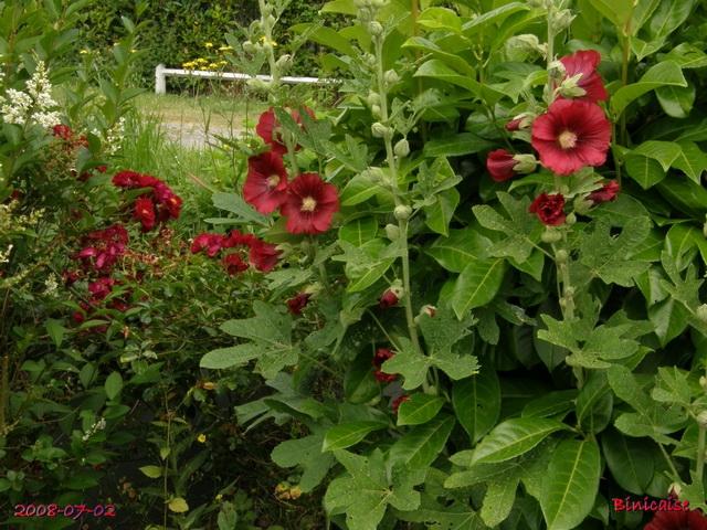 roses_17 dans Photos