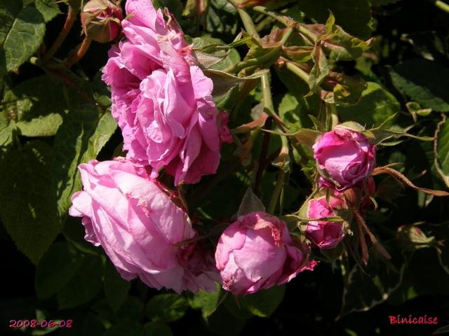 rosier14