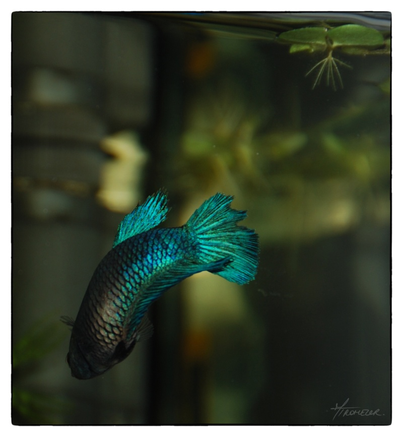 Pourriture sortie de je ne sais o for Bac hopital poisson