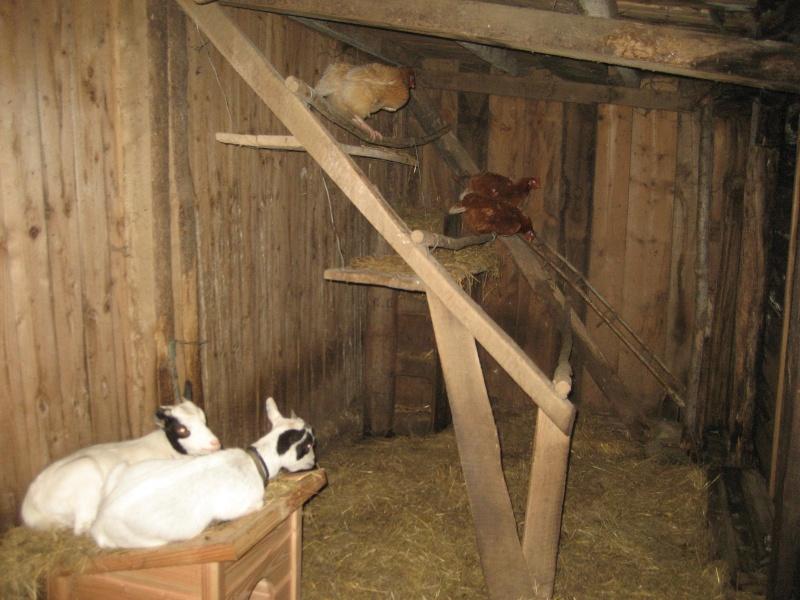 Renard predateur page 2 - Maison pour les poules ...
