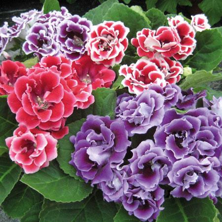 Hoa cúc vàng - NT Truyện | Lạc hoa hữu ý tùy
