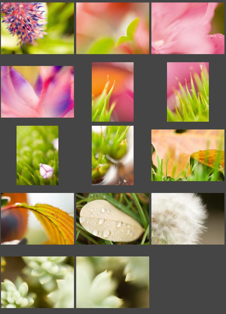 Yüksek çözünürlük makro çiçek fotoğrafları