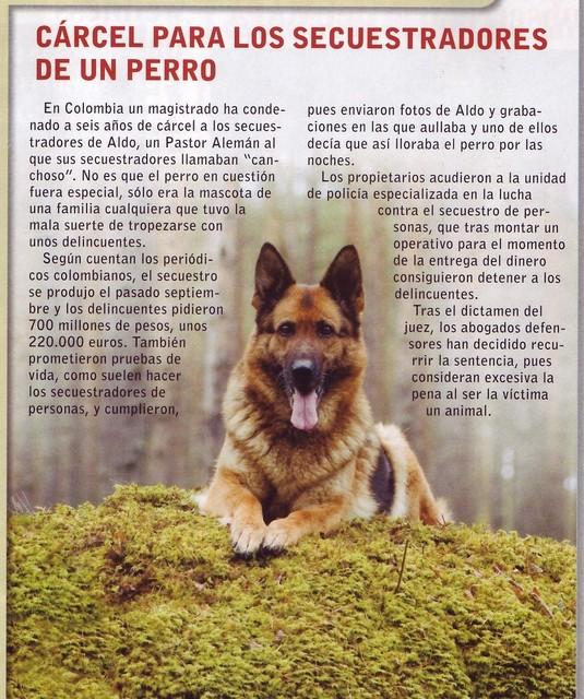 perros10.jpg