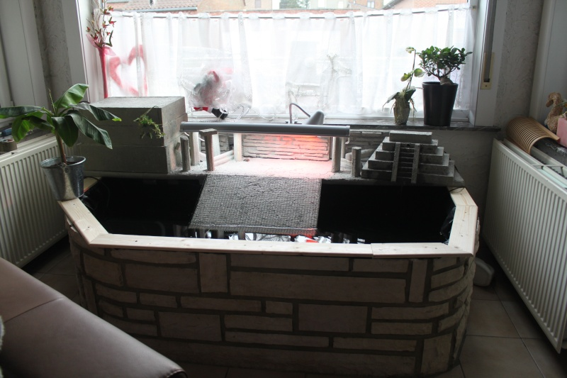 d coration bassin tortue interieur 39 mulhouse bassin. Black Bedroom Furniture Sets. Home Design Ideas
