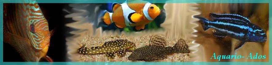 Comment nourrir des b b s rouges gorge for Nourrir des poissons rouges