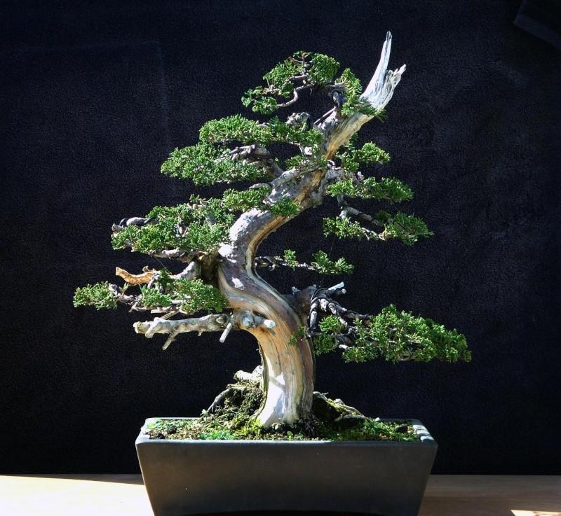 Proyecto tanuki chocante for Estanterias para bonsais