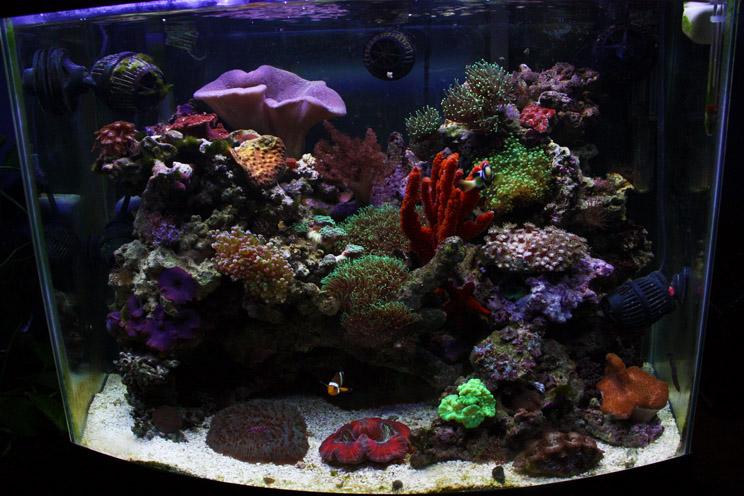 aquarium eau douce salee