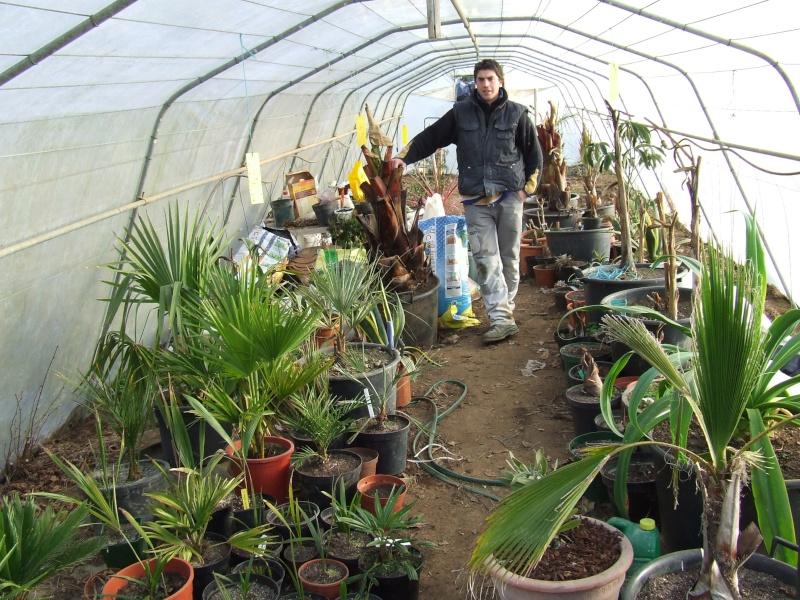 Ma serre au jardin forum de jardinage - Ma serre de jardin ...