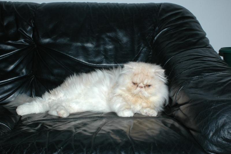 silver le chat qui r clame toujours des calins. Black Bedroom Furniture Sets. Home Design Ideas