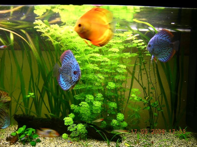240l aquarium amazonien for Bac a poisson 2000l
